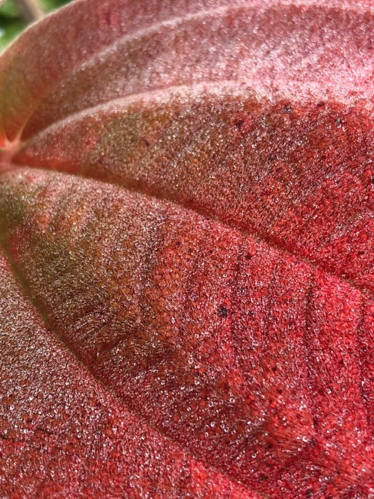 Mick Hales Leaf