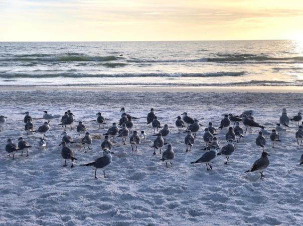 Seabirds by Mick Hales